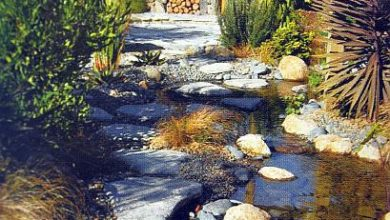 Photo of Каменистые сады