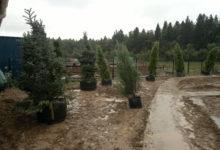 Photo of Услуги по озеленению