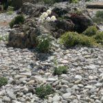 Альпийская горка 4