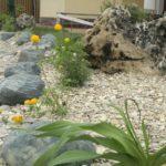 Альпийские растения в рокарии