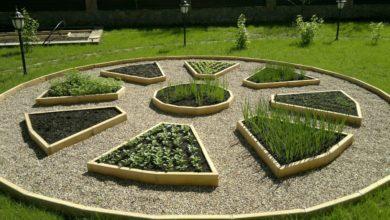 Декоративный огород 2