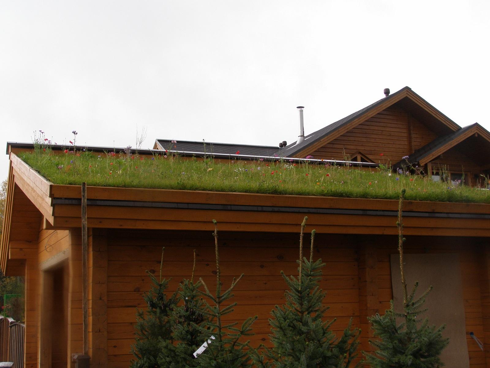 Мавританский газон на крыше 2