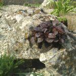 Растения в камнях