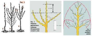 Схемы обрезки деревьев и кустарников