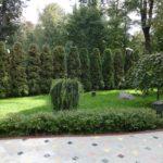 Живая изгородь из туи - фон для ландшафтных композиций