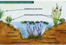 Photo of Водные растения для водоема