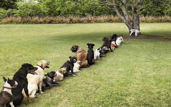 Живые вредители газона - собаки
