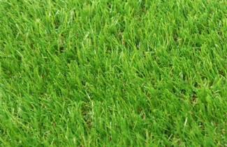 RYEGRASS Искусственный газон