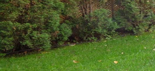 Сплинклер, дождеватель, разбрызгиватель, ороситель, поливалка баблер, капельник что лучше выбрать?