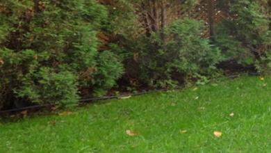Photo of Сплинклер, дождеватель, разбрызгиватель, ороситель, поливалка баблер, капельник что лучше выбрать?
