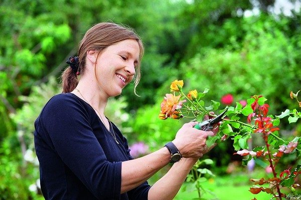 Лунный посевной календарь на июнь 2018 года садовода и огородника