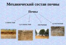 Photo of Характеристика основных видов почв