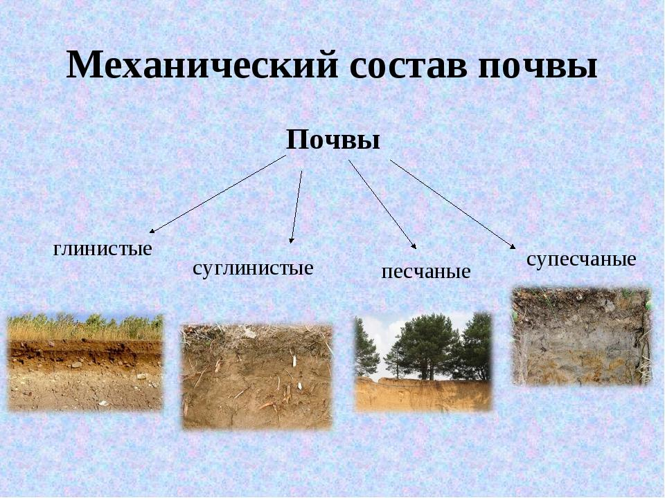 Характеристика основных видов почв